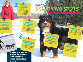 7 Places for Dog Ski Joring in New England